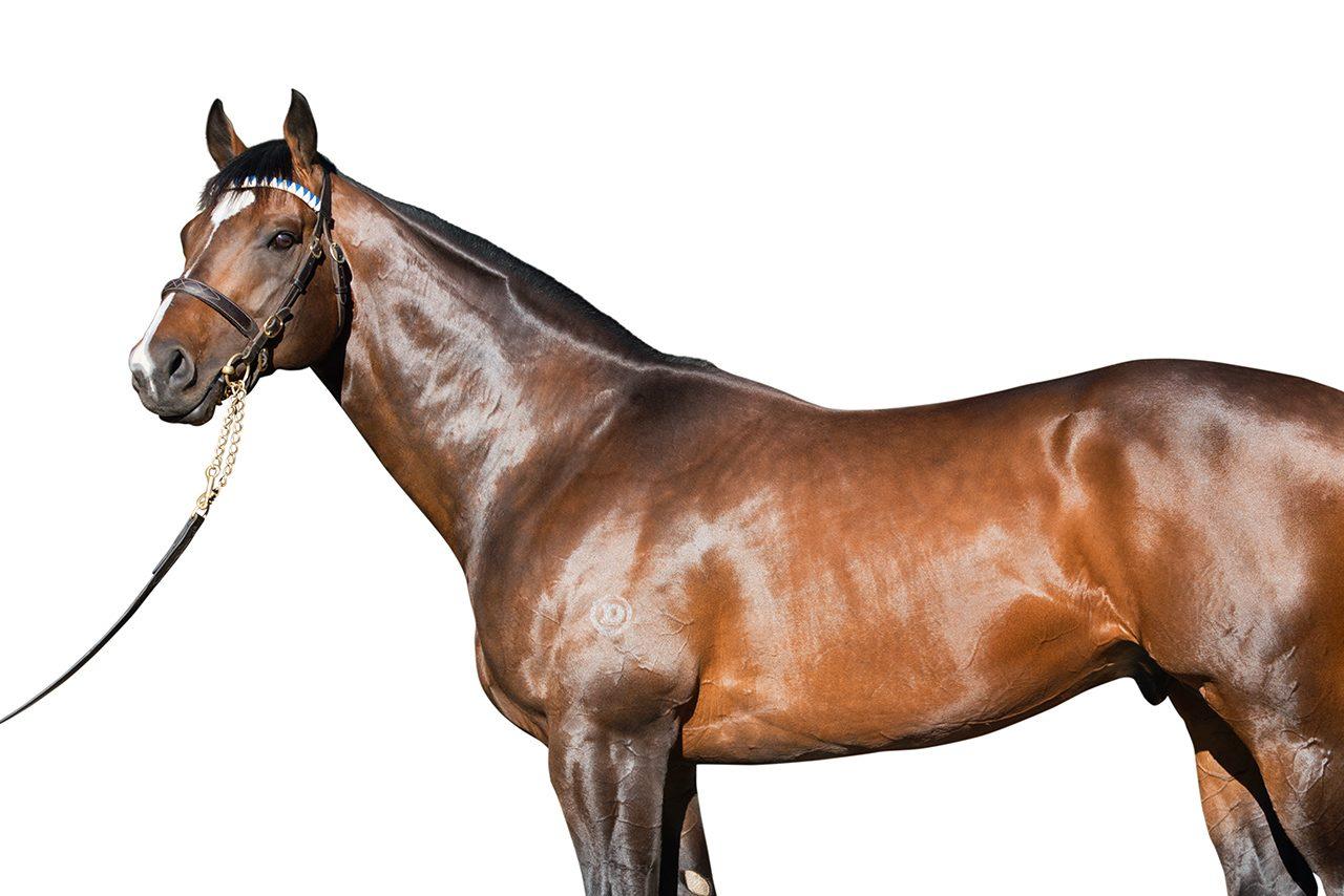 https://www.stallions.com.au/wp-content/uploads/2020/02/astern-1280x854.jpg