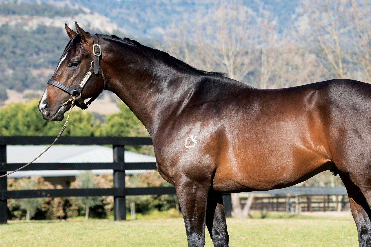 https://www.stallions.com.au/wp-content/uploads/2020/02/kissandmakeup-1280x854.jpg
