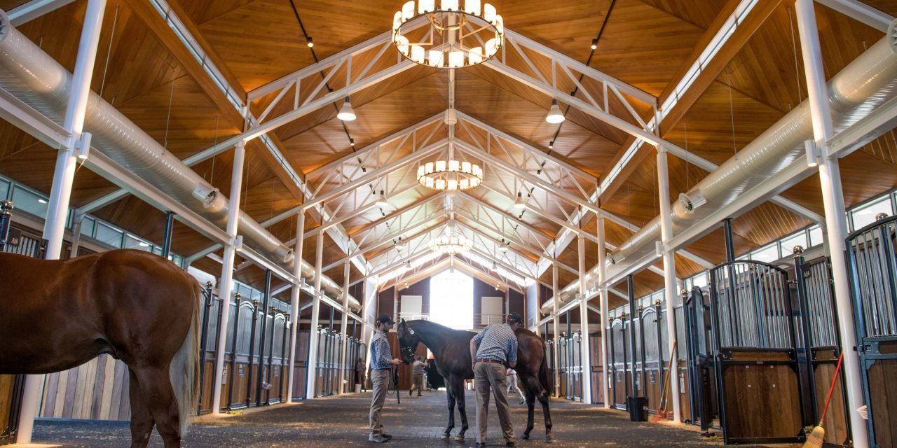https://www.stallions.com.au/wp-content/uploads/2020/03/20190408_SDP_0369-small-1280x640.jpg