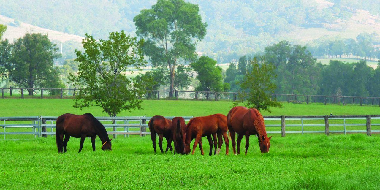 https://www.stallions.com.au/wp-content/uploads/2020/03/DSCF2841-1280x640.jpg