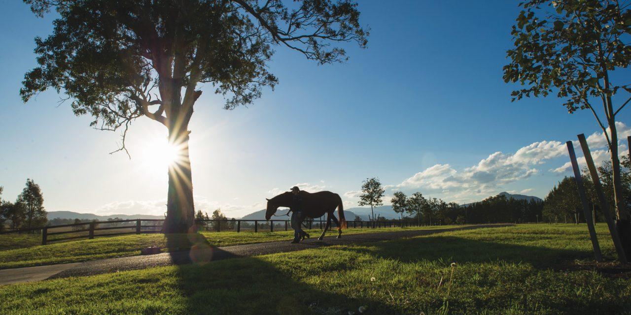 https://www.stallions.com.au/wp-content/uploads/2020/03/DSC_0691-1280x640.jpg