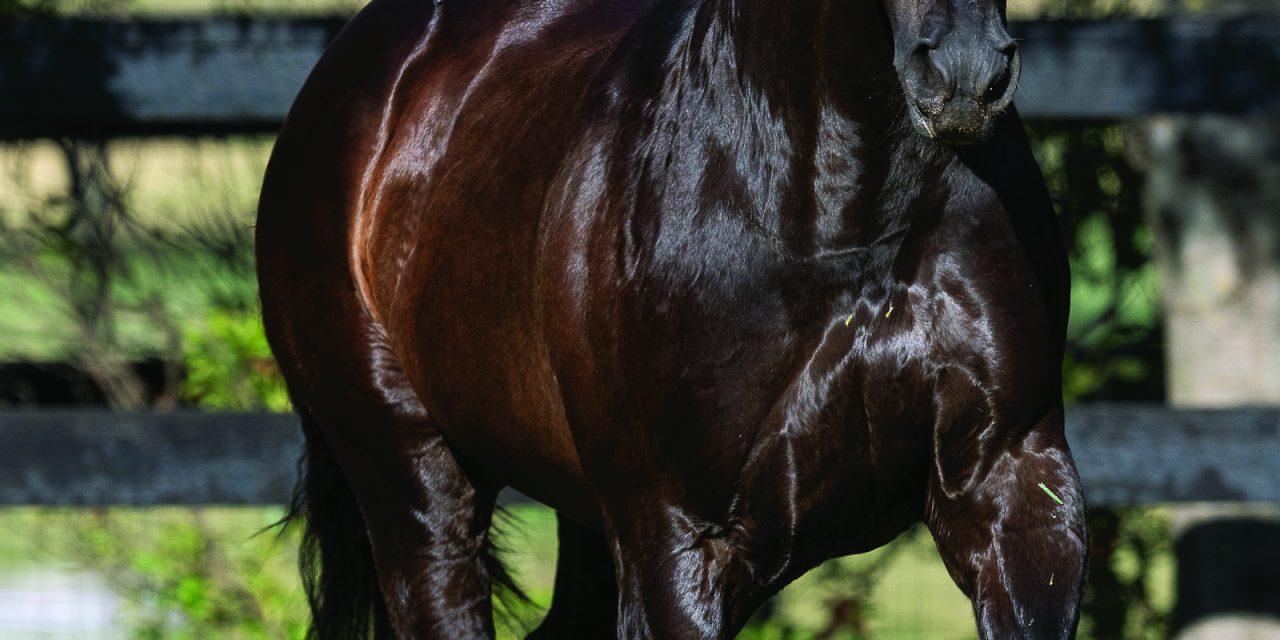 https://www.stallions.com.au/wp-content/uploads/2020/03/MoreThanReady-Paddock-20191115-0369-1280x640.jpg