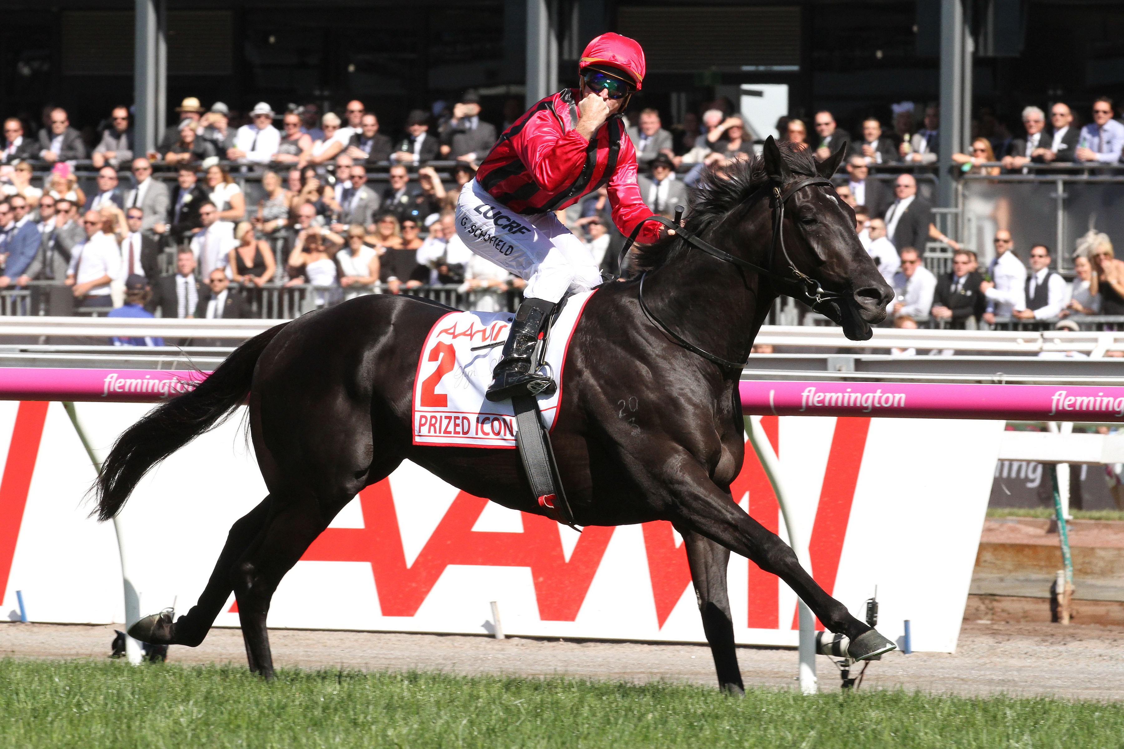 https://www.stallions.com.au/wp-content/uploads/2020/03/PRIZED-ICON1.jpg