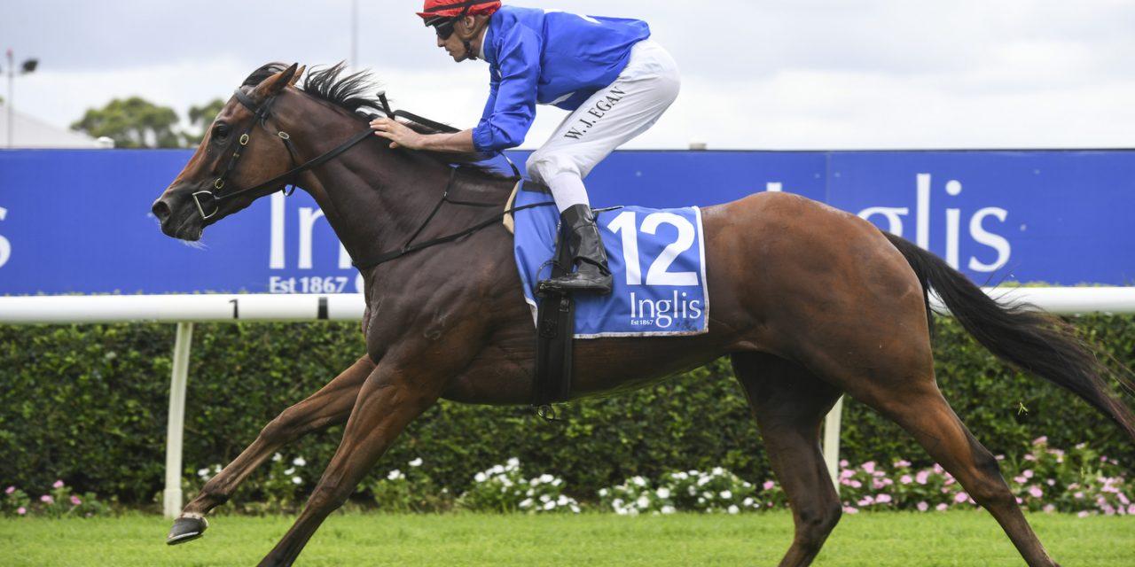 https://www.stallions.com.au/wp-content/uploads/2020/03/RUBISAKI_3_WF_12022020__B1417-1280x640.jpg