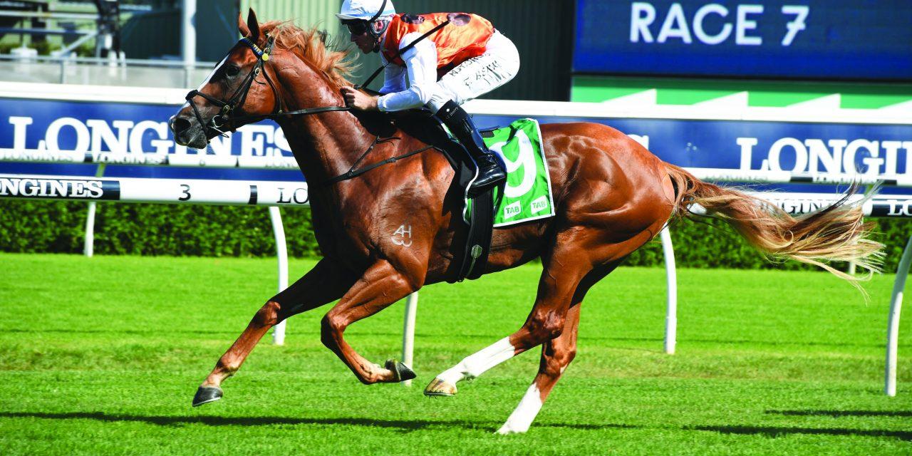 https://www.stallions.com.au/wp-content/uploads/2020/03/Standout-01022020-2340-1280x640.jpg