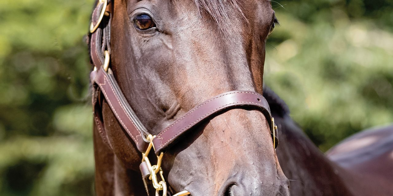 https://www.stallions.com.au/wp-content/uploads/2020/03/Xtravagant-head-shot-HR-1280x640.jpg