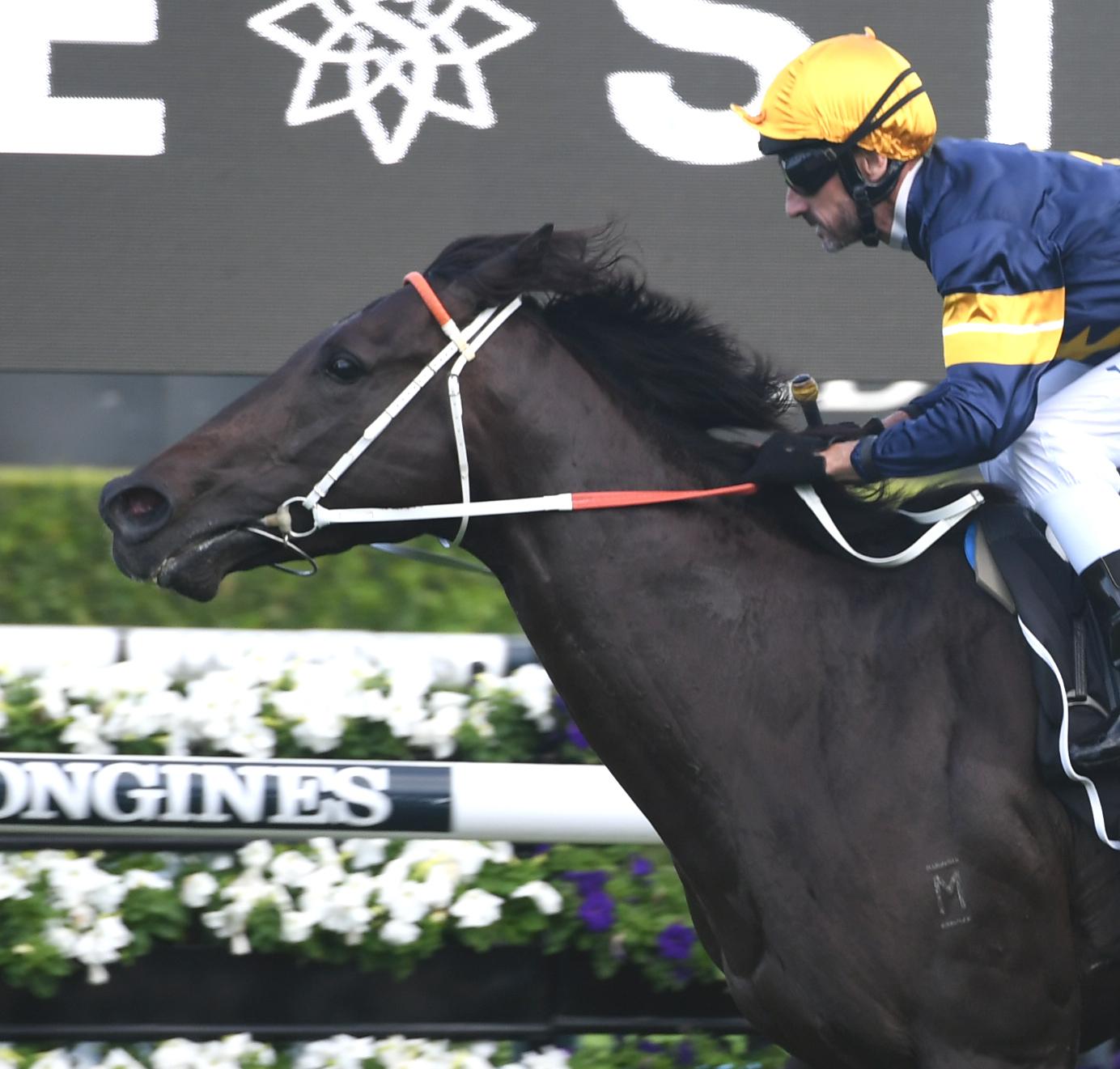 https://www.stallions.com.au/wp-content/uploads/2020/04/Brutal-060419-9910-1.jpg