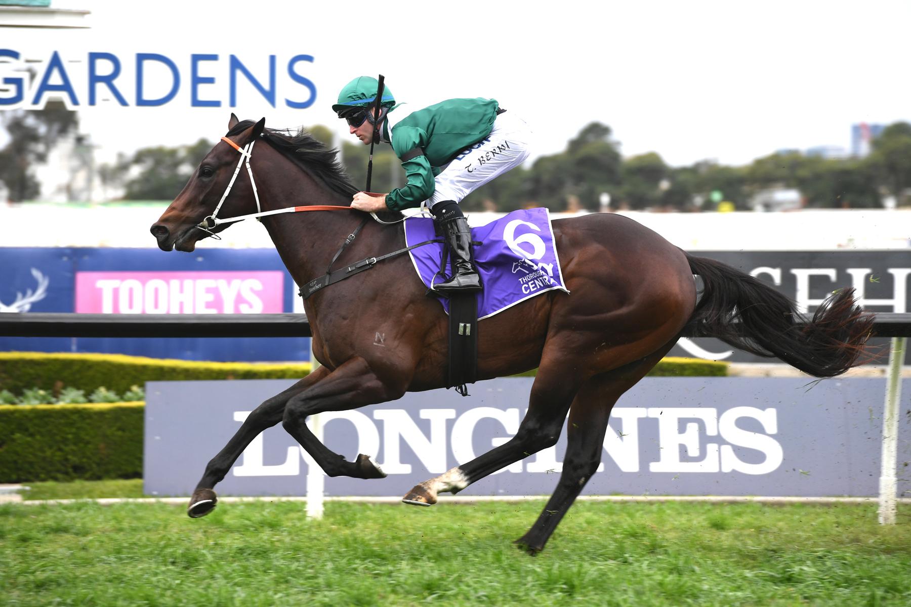 https://www.stallions.com.au/wp-content/uploads/2020/04/Exceedance-9904.jpg