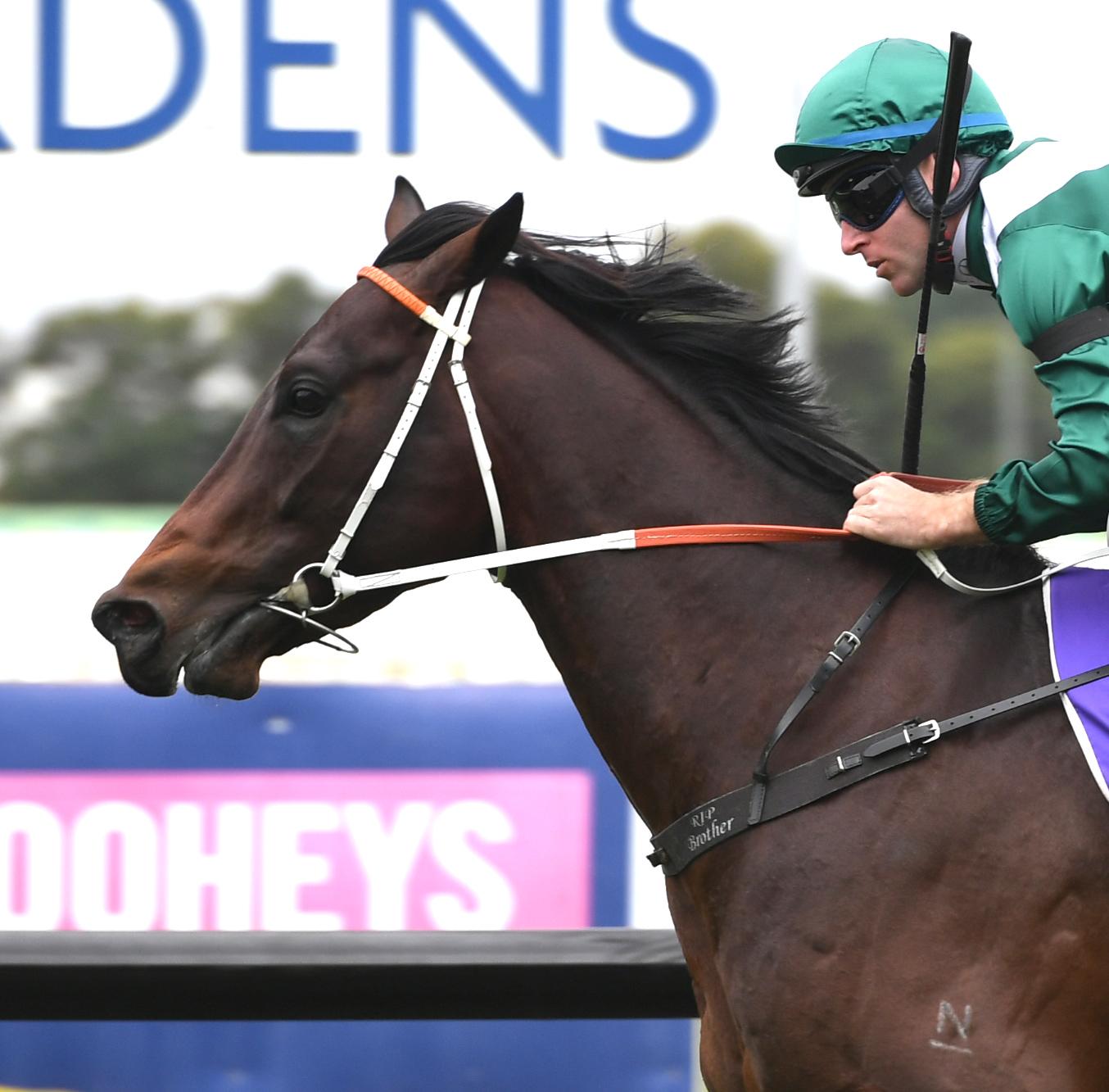 https://www.stallions.com.au/wp-content/uploads/2020/04/Exceedance-crop.jpg