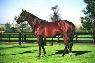 Redoute's Choice