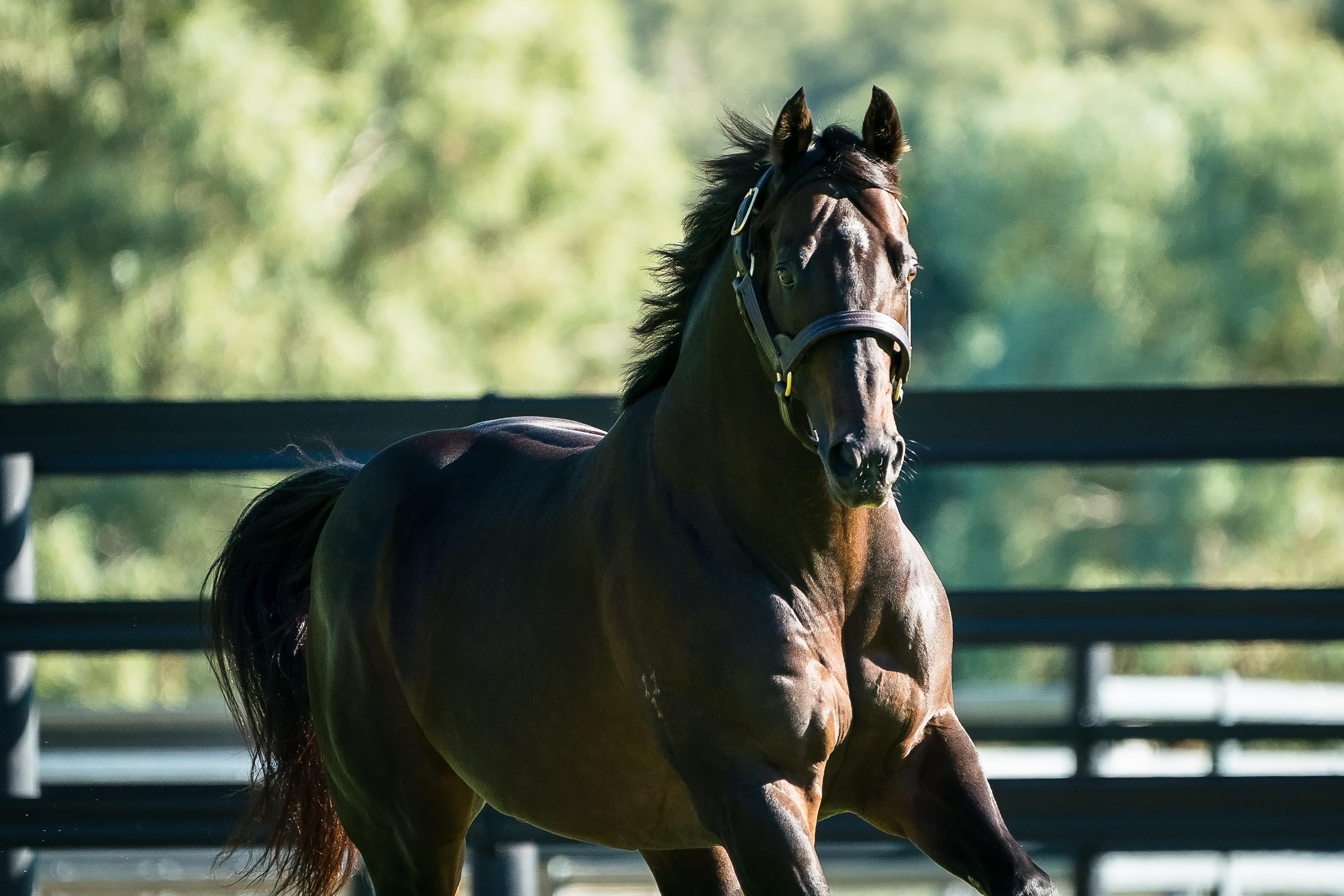 https://www.stallions.com.au/wp-content/uploads/2020/04/Supido-12.jpg