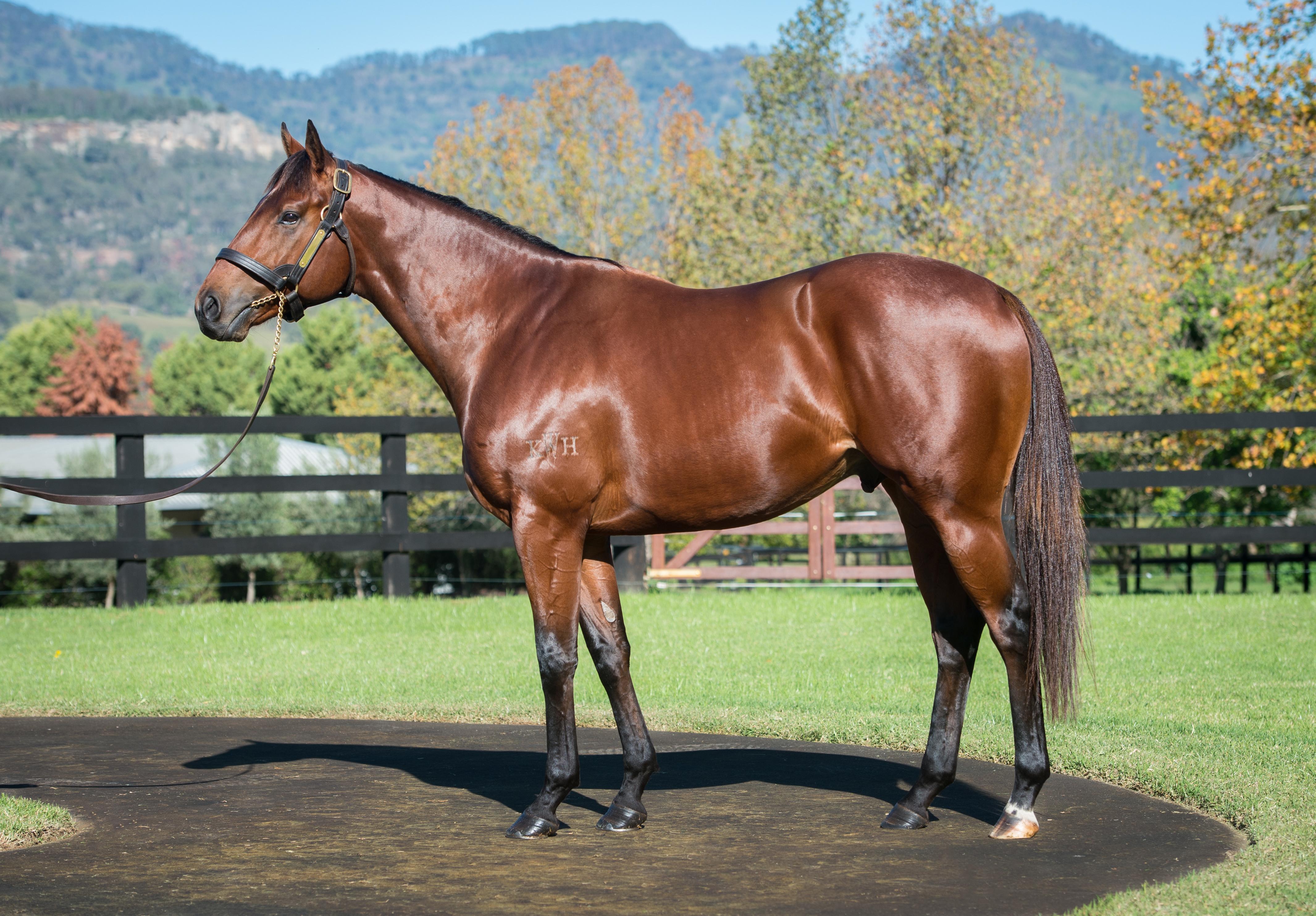 https://www.stallions.com.au/wp-content/uploads/2020/05/2020-05_Dubious_Conformation2_Credit-Katrina-Partridge_Ed.jpg