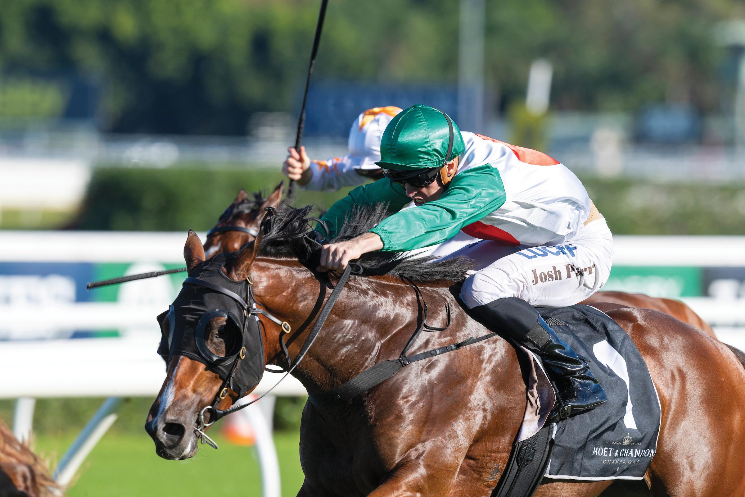 https://www.stallions.com.au/wp-content/uploads/2020/05/Castelvecchio-ParrJoshua-20190420-8480.png