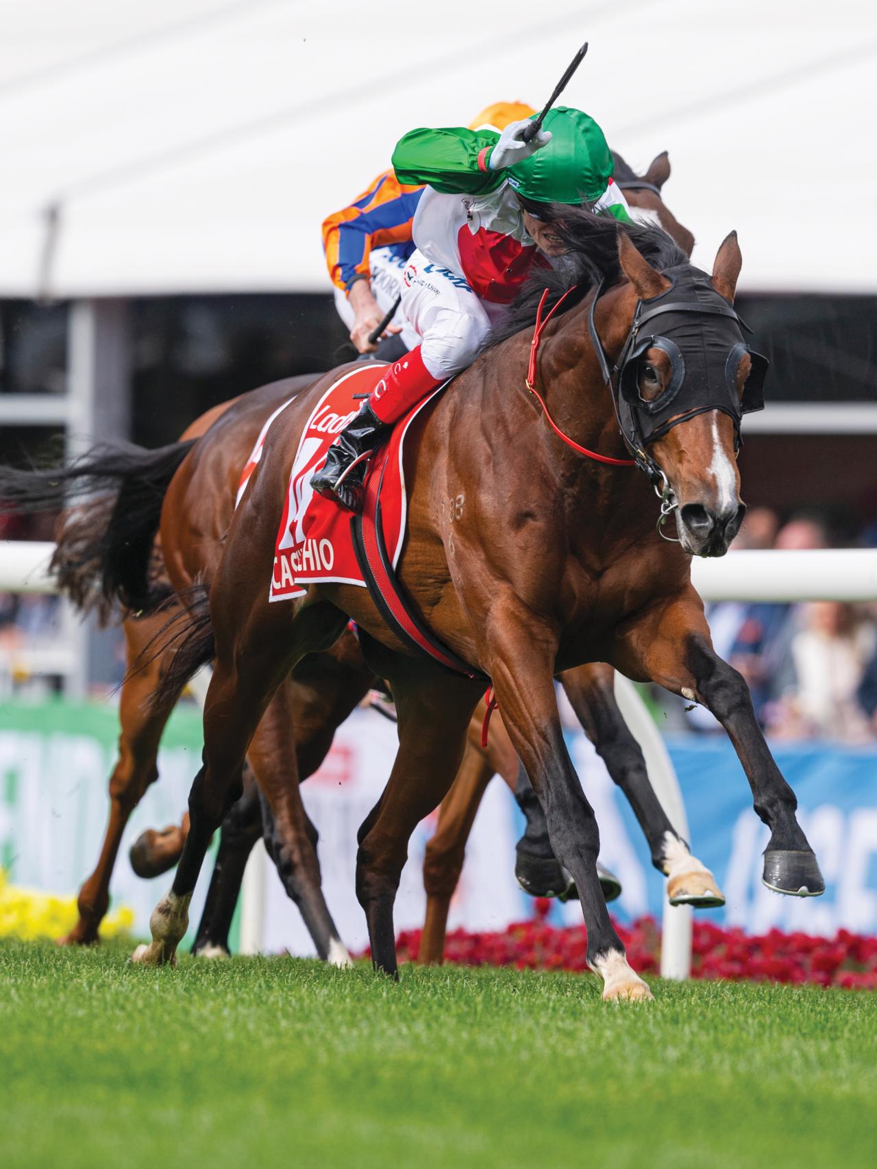 https://www.stallions.com.au/wp-content/uploads/2020/05/Castelvecchio-WilliamsCraig-20191026-3123-1280x1707.png