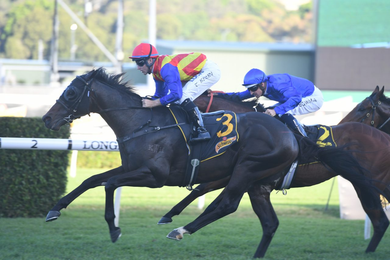 https://www.stallions.com.au/wp-content/uploads/2020/05/Pierata-200419-4272-1280x853.jpg