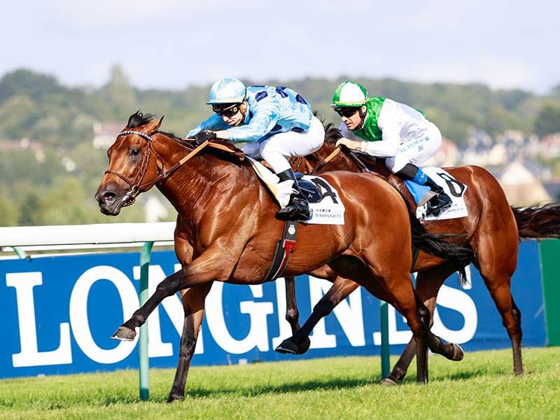 https://www.stallions.com.au/wp-content/uploads/2020/06/800x600px_shutterstock_editorial_10362610ad_OLMEDO_Editorial-credit-Zuzanna-Lupa-racingfotos.com-Shutterstock.jpg
