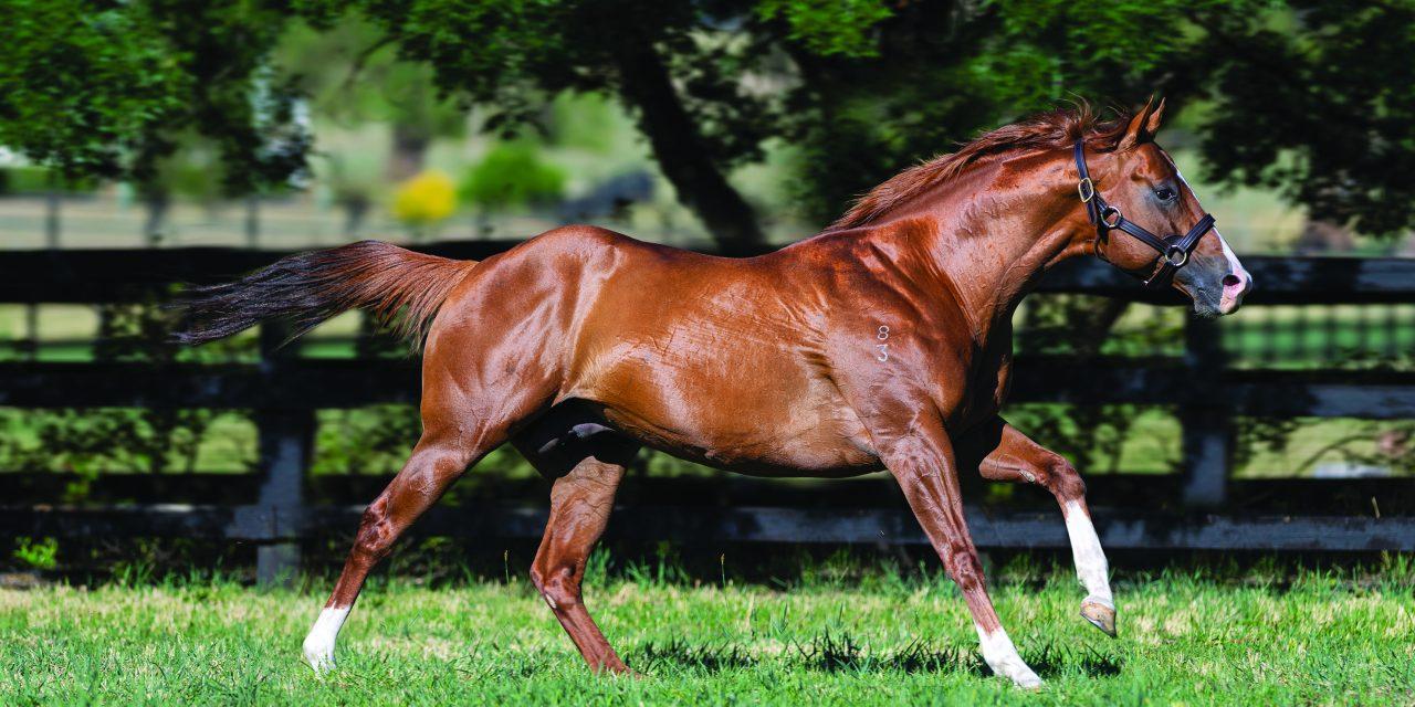 https://www.stallions.com.au/wp-content/uploads/2020/07/StarTurn-Paddock-20191115-9328_who_B-1280x640.jpg