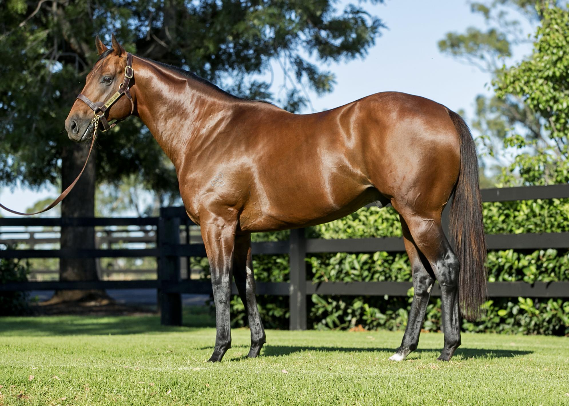 https://www.stallions.com.au/wp-content/uploads/2020/07/Wandjina-1.jpg