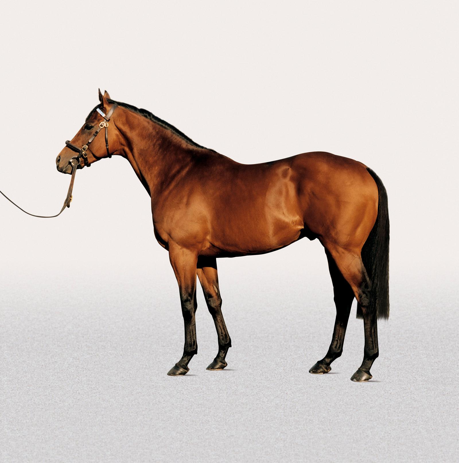 https://www.stallions.com.au/wp-content/uploads/2020/08/Dubawi.jpg