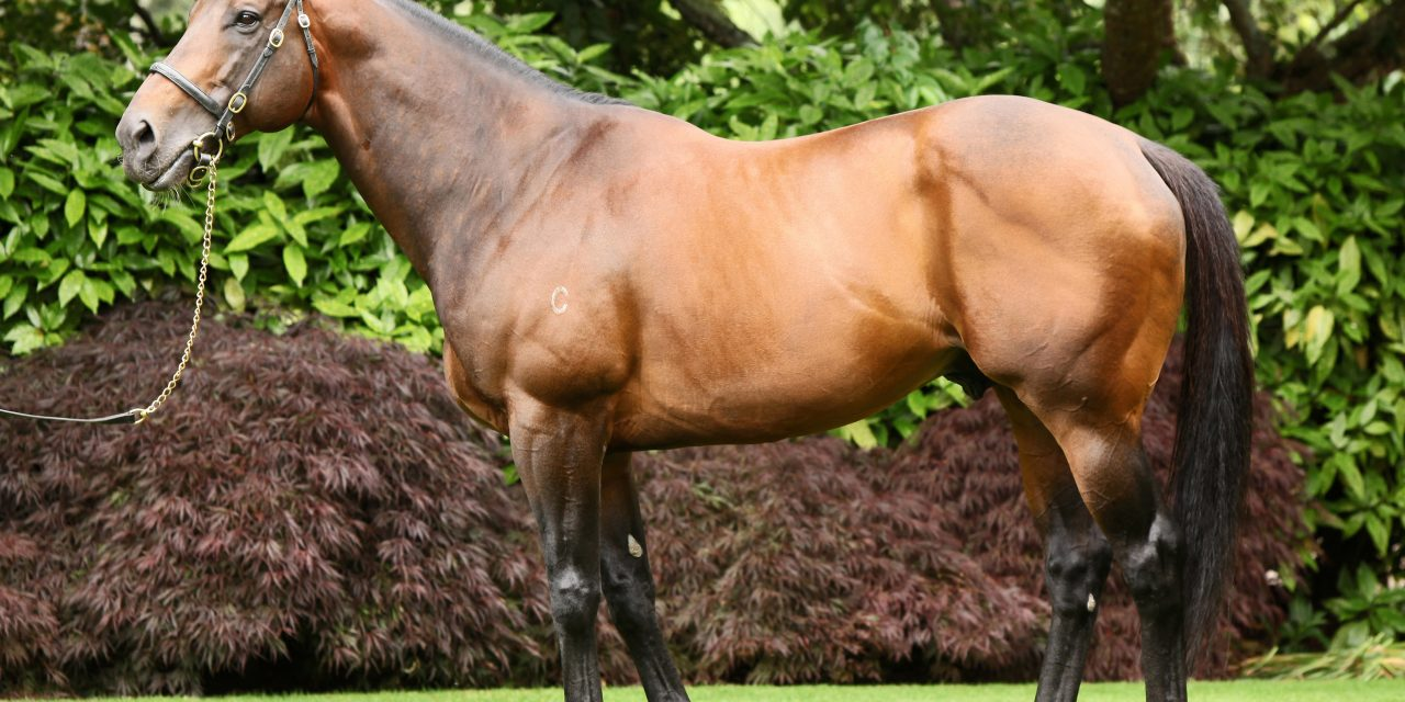 https://www.stallions.com.au/wp-content/uploads/2020/08/Fastnet-_Rock_OE_530dpi_2015-1280x640.jpg