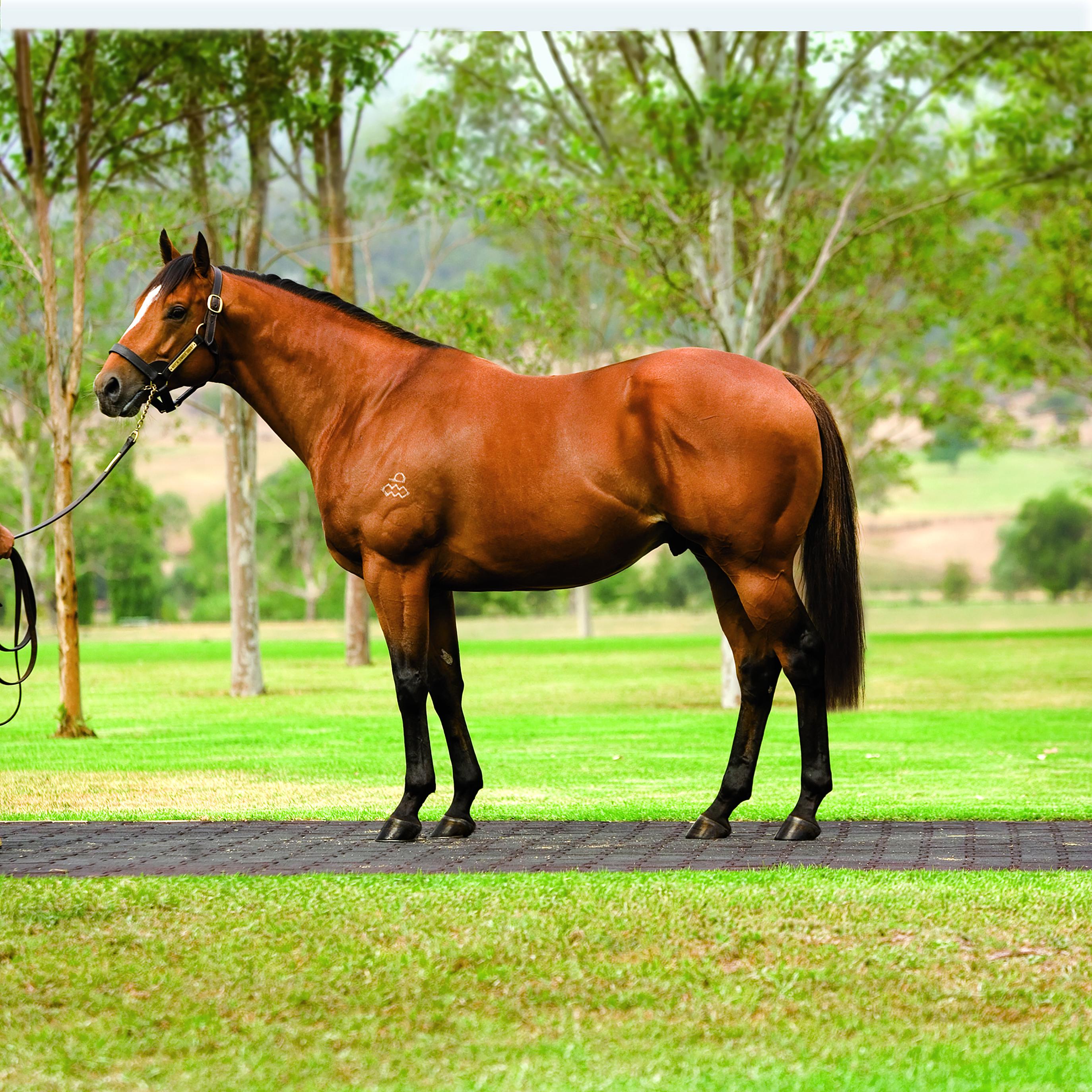 https://www.stallions.com.au/wp-content/uploads/2020/08/Not-a-Single-Doubt_2015.jpg