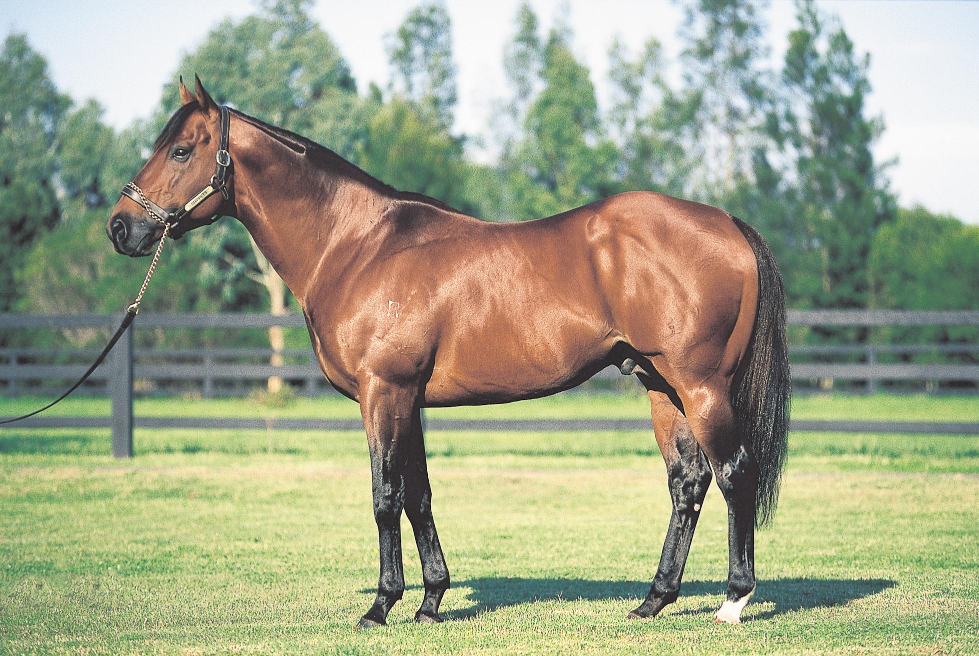 https://www.stallions.com.au/wp-content/uploads/2020/08/Snippets-S2000.jpg