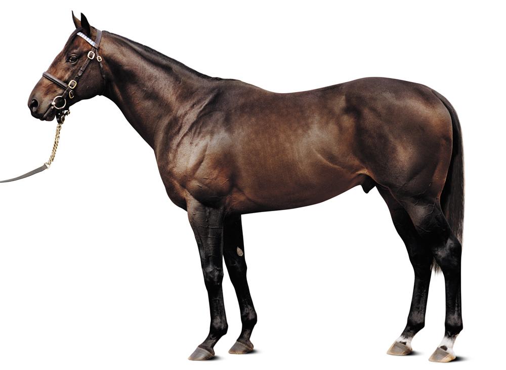 https://www.stallions.com.au/wp-content/uploads/2020/08/Street_Cry.jpg