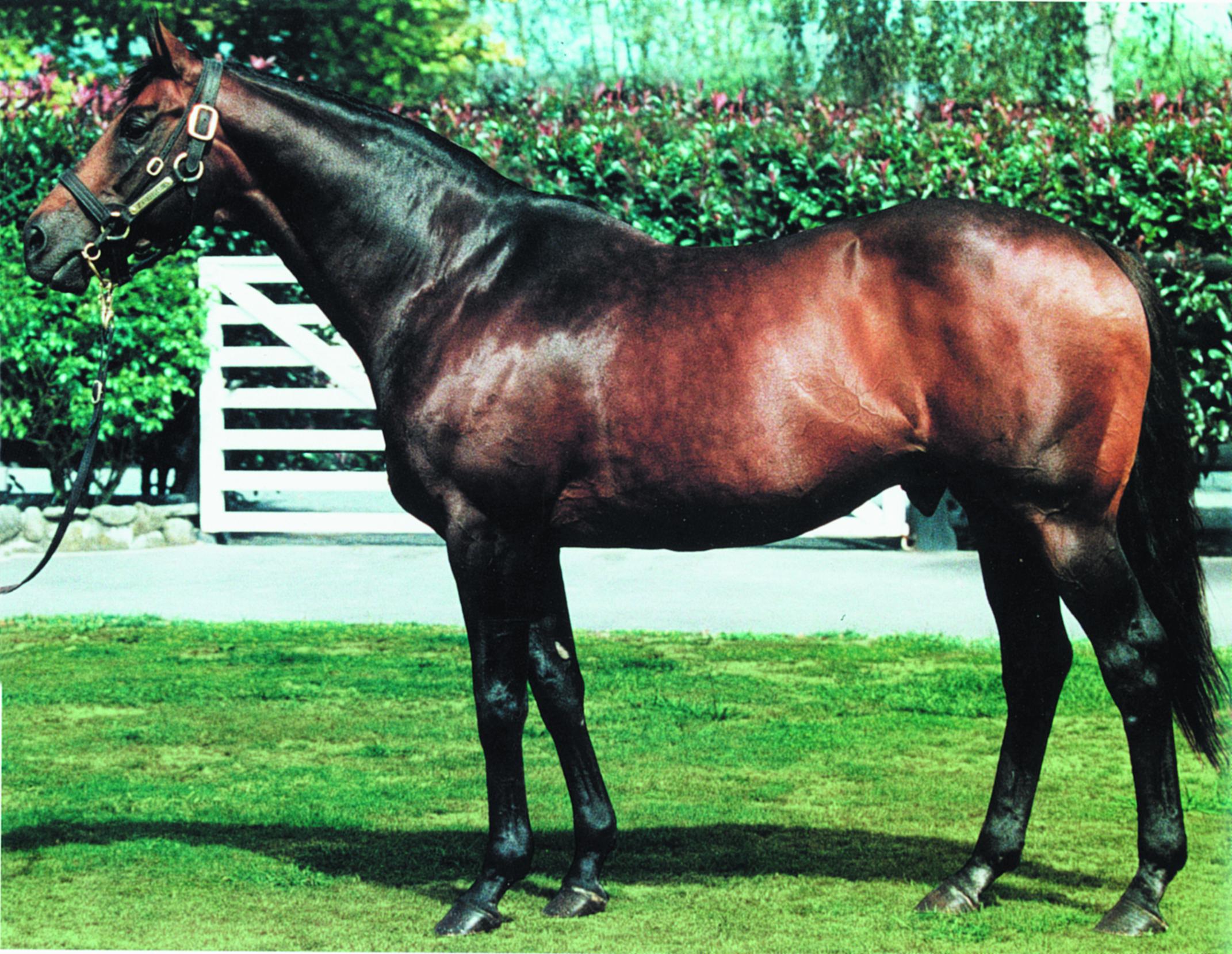 https://www.stallions.com.au/wp-content/uploads/2020/08/Zabeel.jpg