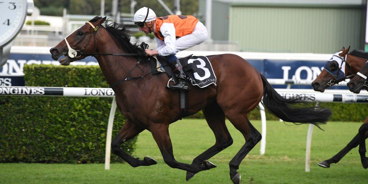 https://www.stallions.com.au/wp-content/uploads/2020/12/Bottega-09052020-0707-1280x640.jpg