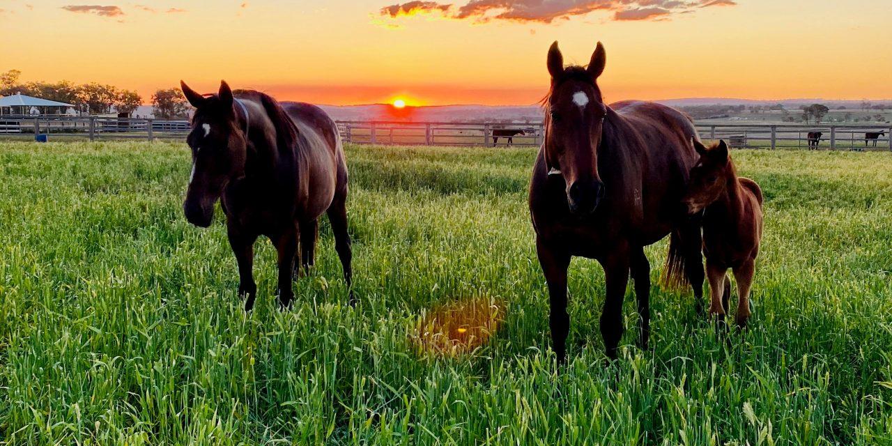 https://www.stallions.com.au/wp-content/uploads/2020/12/Paddock-13-1280x640.jpg