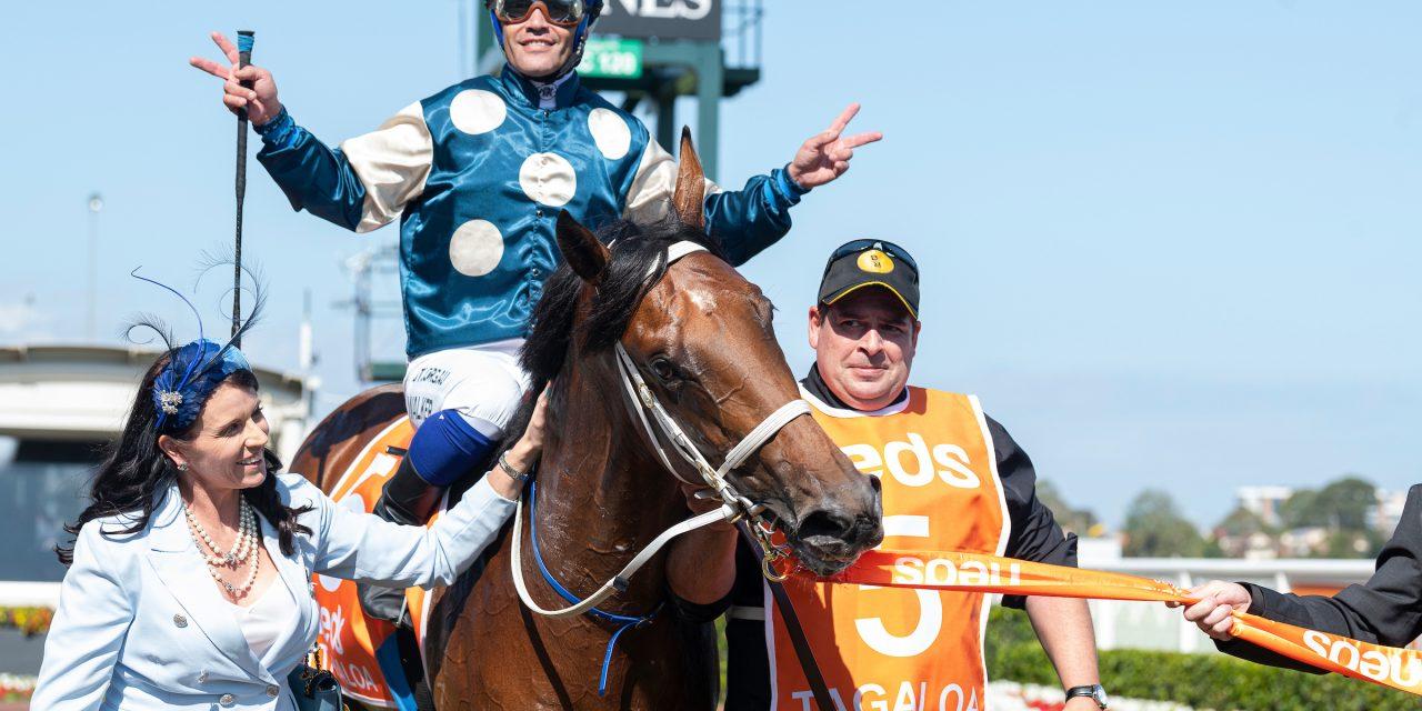 https://www.stallions.com.au/wp-content/uploads/2020/12/Tagaloa-WalkerMichael-YoungNatalie-20200222_9877-1280x640.jpg