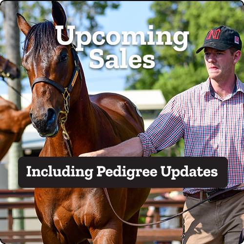 https://www.stallions.com.au/wp-content/uploads/2020/12/upcoming-sales-1.png
