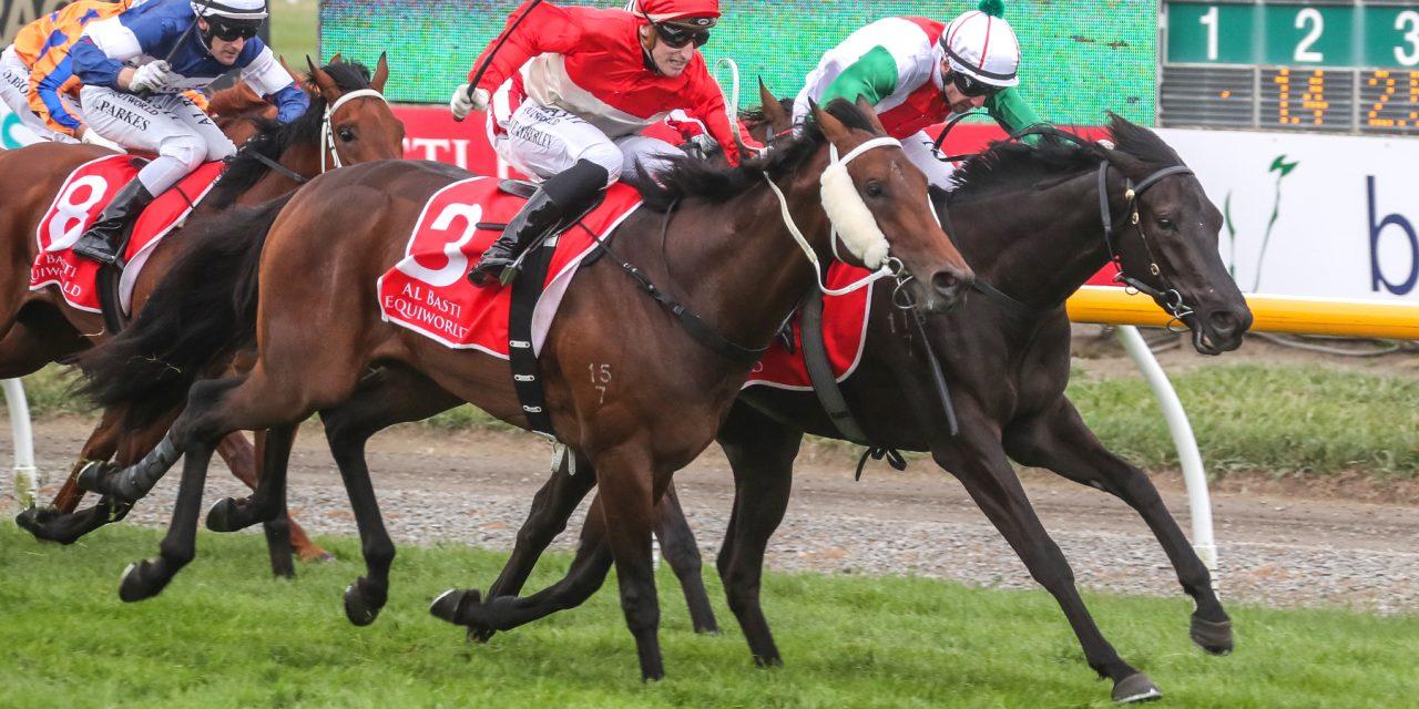 https://www.stallions.com.au/wp-content/uploads/2021/01/AEGON-ACTION-1-1280x640.jpg
