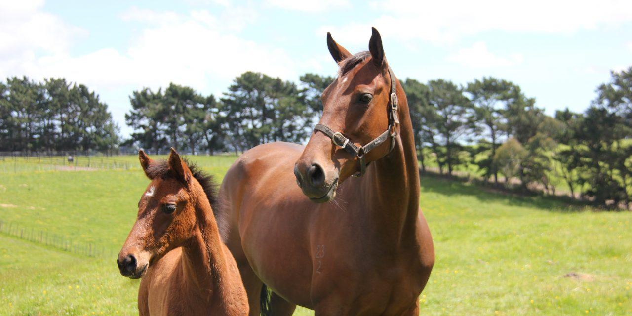 https://www.stallions.com.au/wp-content/uploads/2021/01/Farm_2-1280x640.jpg