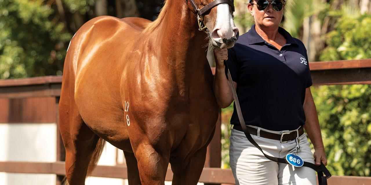 https://www.stallions.com.au/wp-content/uploads/2021/01/Lot-686-3-1280x640.jpg