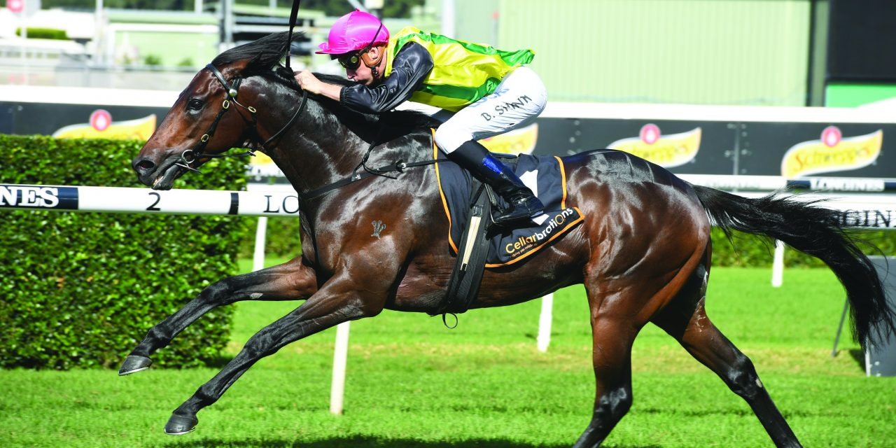 https://www.stallions.com.au/wp-content/uploads/2021/01/The-Chosen-One-200419-3703-1280x640.jpg