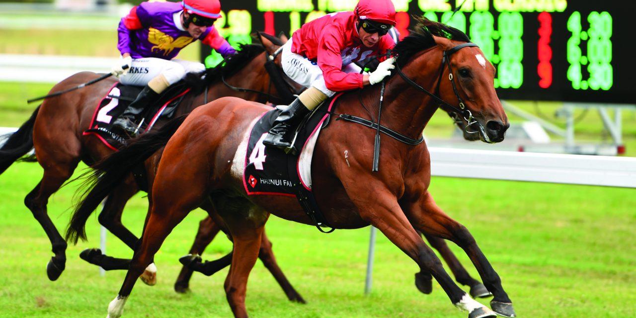 https://www.stallions.com.au/wp-content/uploads/2021/01/VOLKSTOKNBARRELL_OTAKI_27-2-2016_RACE_IMAGES_PN-1280x640.jpg