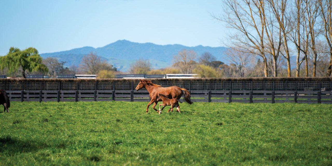 https://www.stallions.com.au/wp-content/uploads/2021/01/cambridge-1280x640.jpg