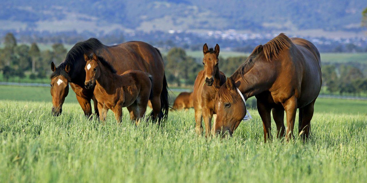 https://www.stallions.com.au/wp-content/uploads/2021/01/mf1-1280x640.jpg