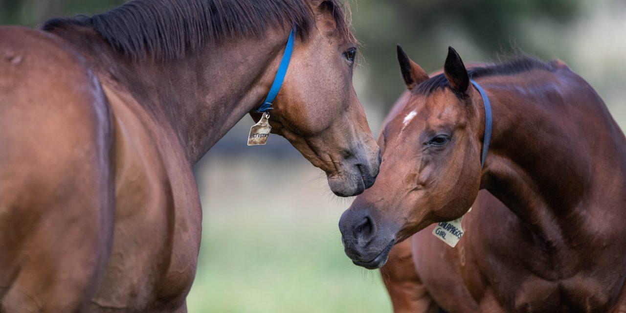 https://www.stallions.com.au/wp-content/uploads/2021/03/Artistry-and-GG-1280x640.jpg
