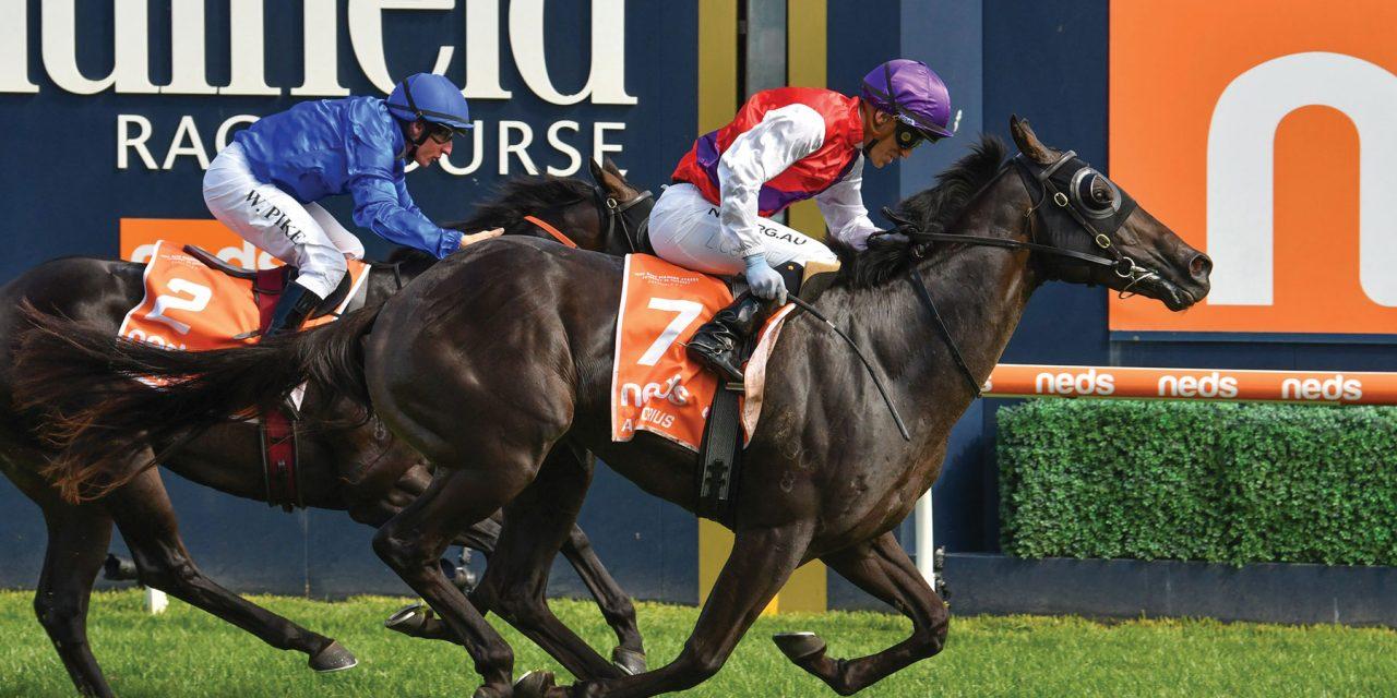 https://www.stallions.com.au/wp-content/uploads/2021/03/Artorius-4853-Bruno-full-rights-1280x640.jpg