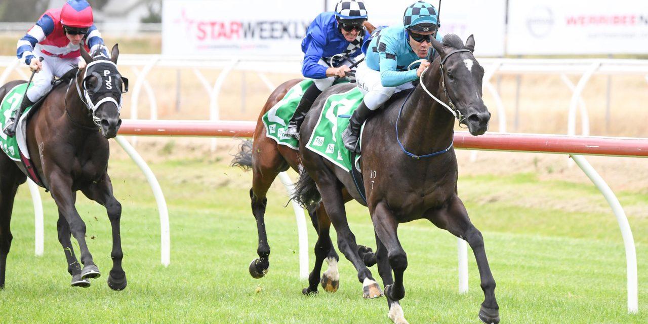 https://www.stallions.com.au/wp-content/uploads/2021/03/Litchfield-County_9114-1280x640.jpg