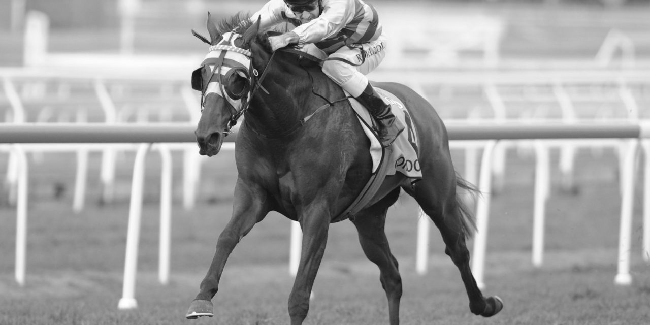 https://www.stallions.com.au/wp-content/uploads/2021/04/Gondokoro_01-06-2013_Win_Eagle-Farm_7__Image-210-1280x640.jpg
