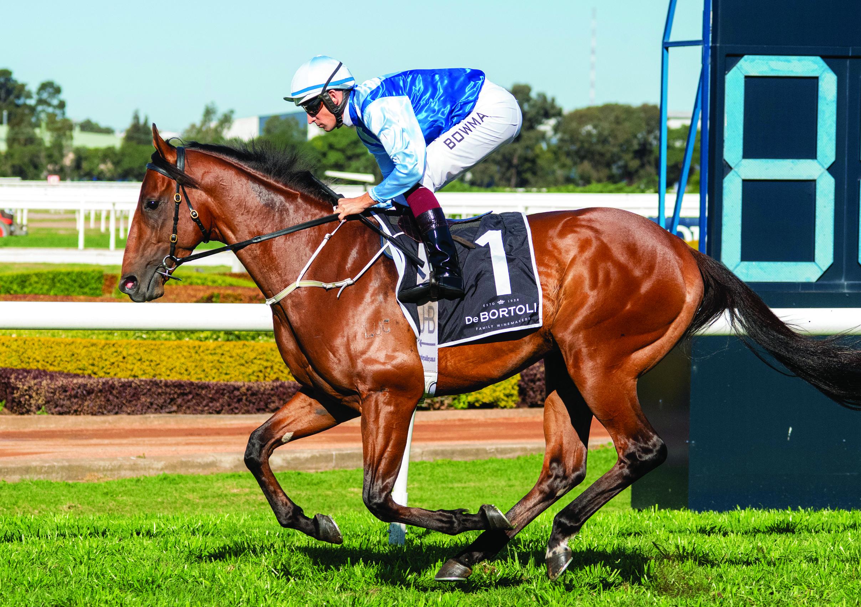 https://www.stallions.com.au/wp-content/uploads/2021/05/Farnan.jpg