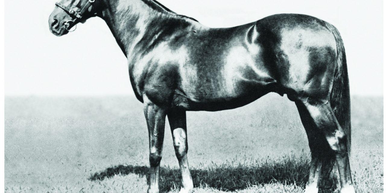 https://www.stallions.com.au/wp-content/uploads/2021/07/Hyperion-1280x640.jpg