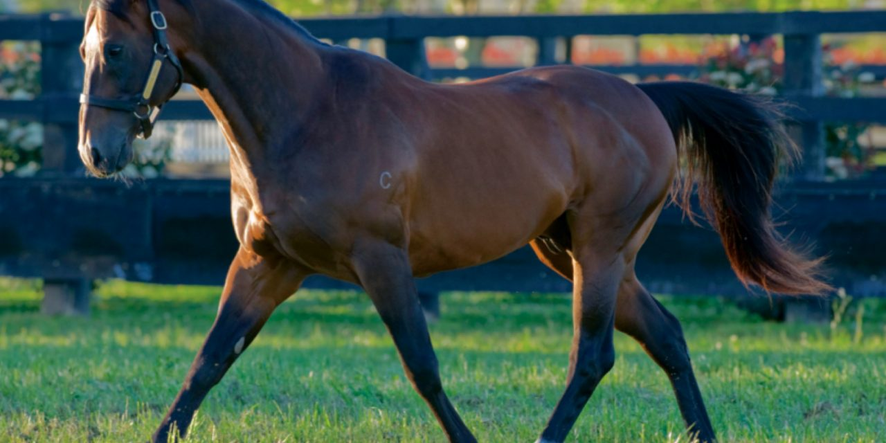 https://www.stallions.com.au/wp-content/uploads/2021/07/redoutes-choice-APEX-1280x640.jpg