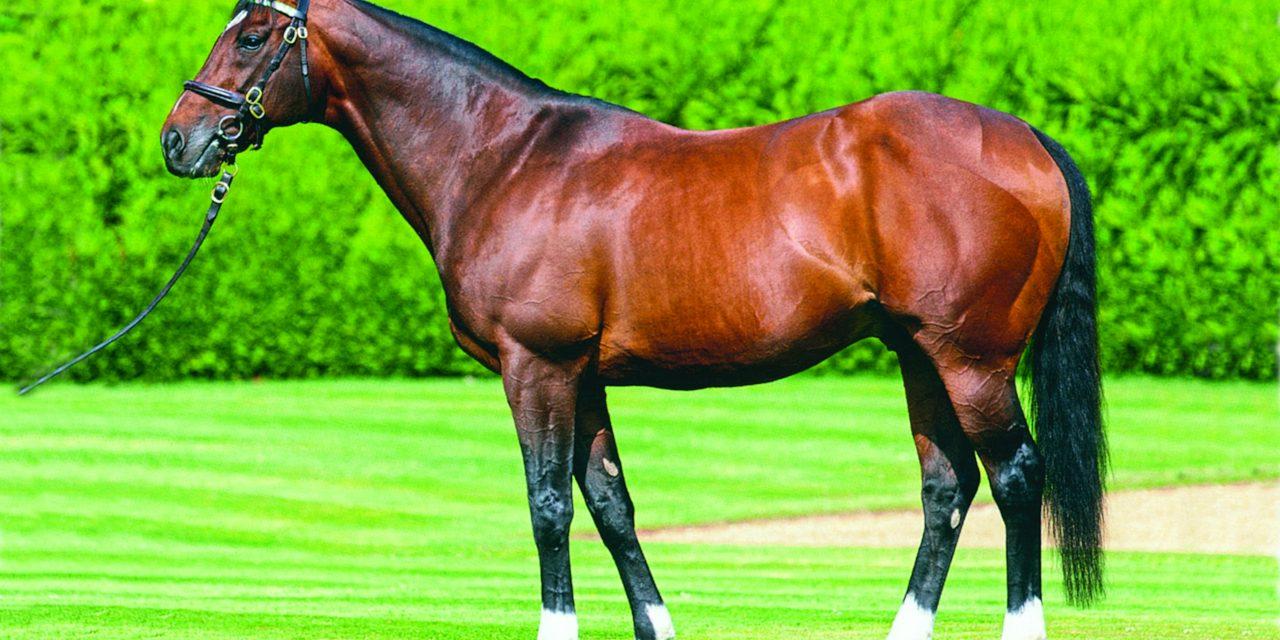 https://www.stallions.com.au/wp-content/uploads/2021/08/Frankel-posed-1280x640.jpg