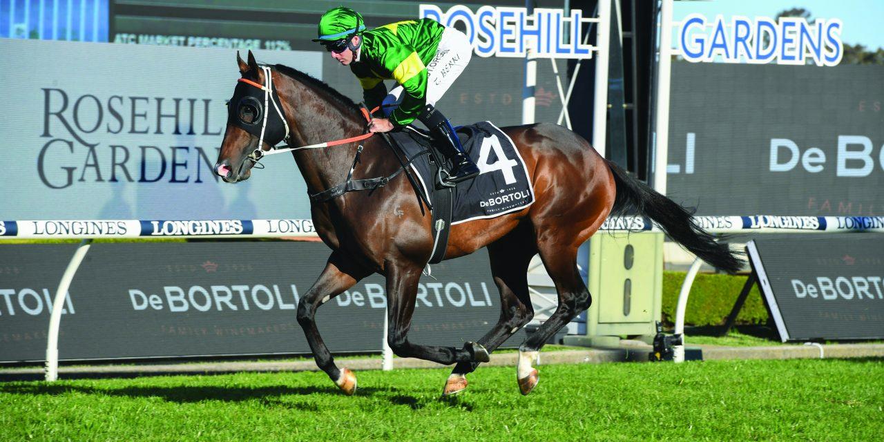 https://www.stallions.com.au/wp-content/uploads/2021/08/Ole-Kirk-Winner-of-the-Gr.1-Golden-Rose-1280x640.jpg