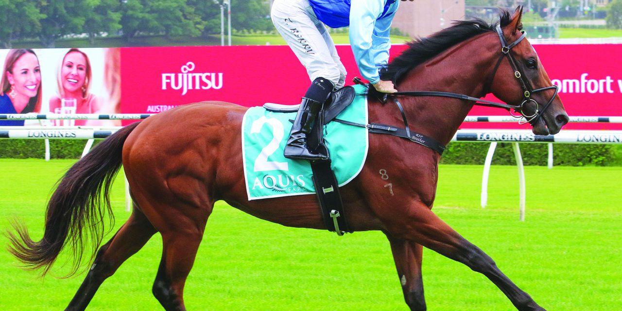 https://www.stallions.com.au/wp-content/uploads/2021/08/Prague_2021-1280x640.jpg