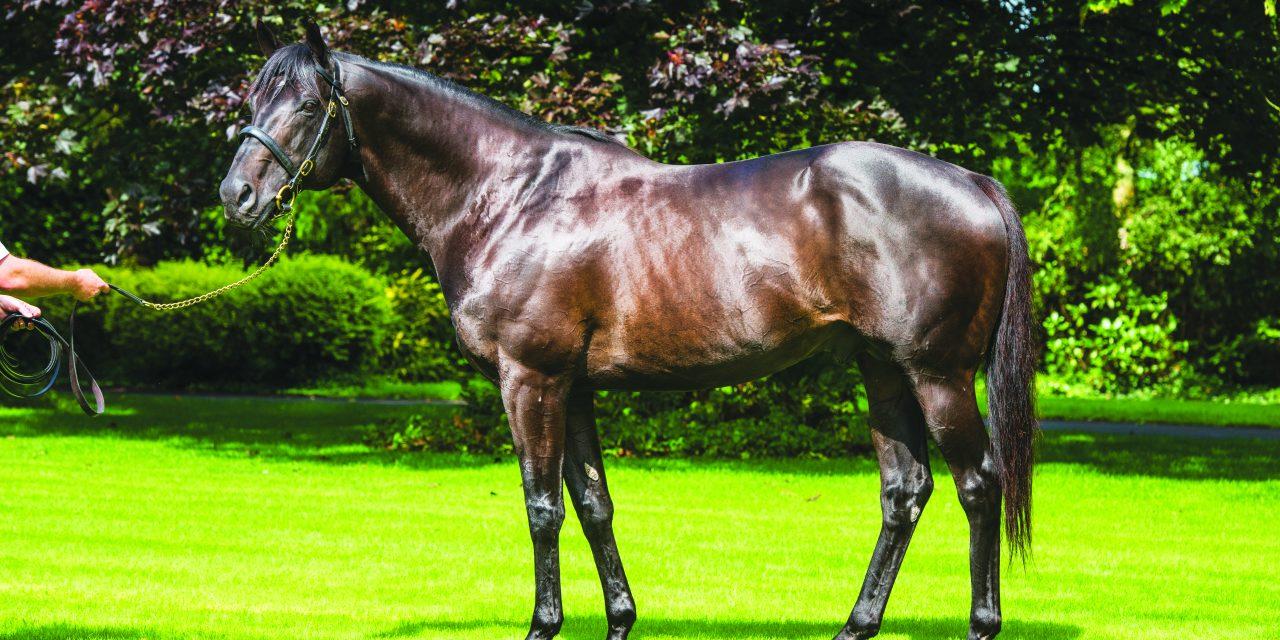 https://www.stallions.com.au/wp-content/uploads/2021/08/Wootton-Bassett-Conformation_2021-1280x640.jpg
